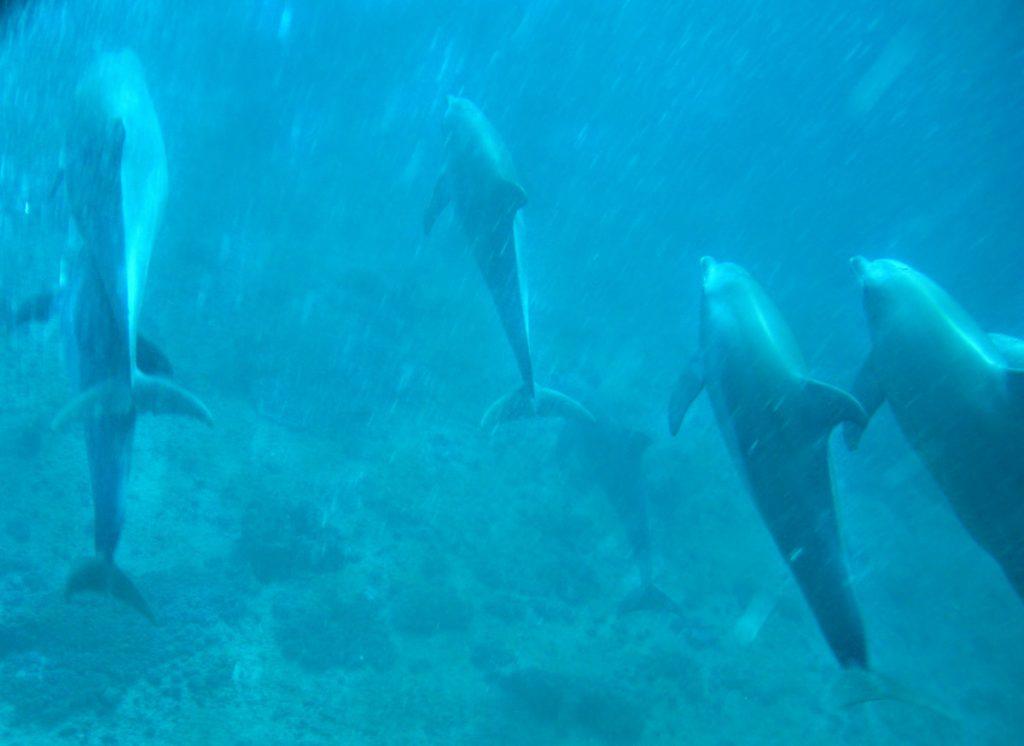 Zanzibar Delfini