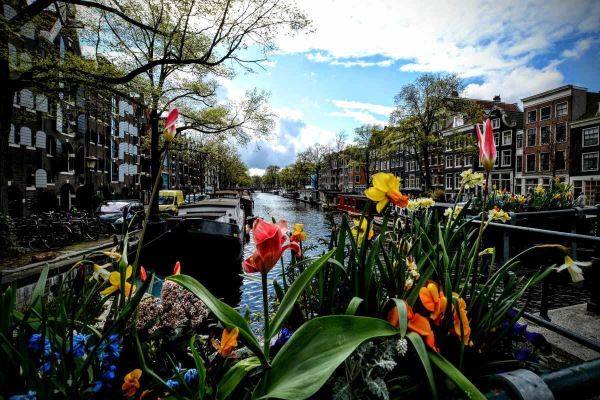 Amsterdam canali tulipani
