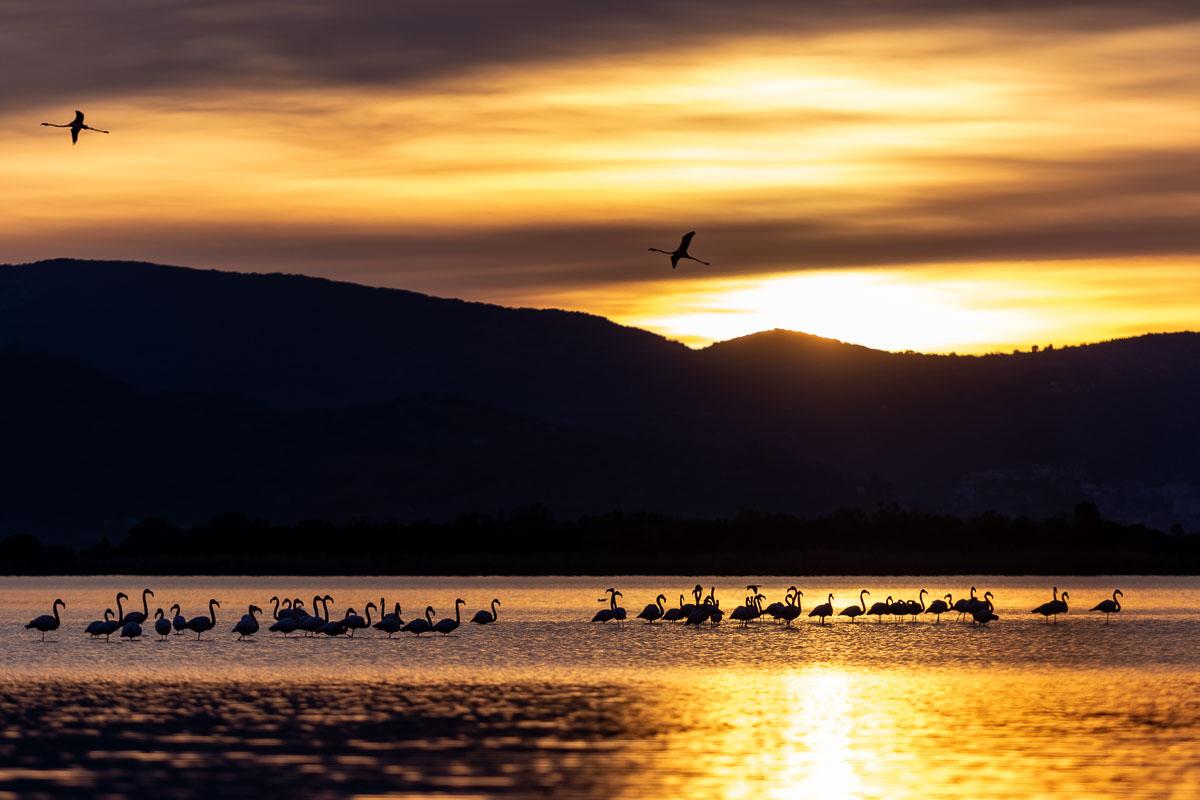 Workshop di fotografia naturalistica fenicotteri al tramonto
